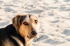 Spielen des Hundes auf dem Strand Lizenzfreies Stockbild
