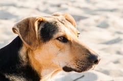 Spielen des Hundes auf dem Strand Stockbild