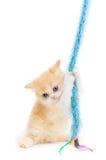 Spielen des Kätzchens Lizenzfreies Stockfoto