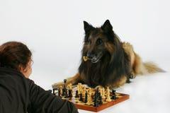 Spielen des Schachs mit dem Hund stockfotos