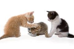 Spielen mit drei Kätzchen lizenzfreie stockfotografie