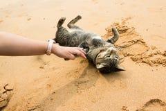 Spielen mit einer Katze auf dem Strand Lizenzfreie Stockfotografie