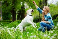 Spielen mit Hund Stockbild