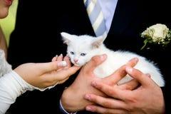 Spielen mit Katze Stockbild