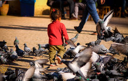 Spielen mit Vögeln Stockfoto