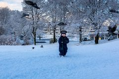 Spielen mit Vögeln im Winter stockfotos