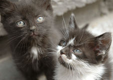 Spielen mit zwei wenig Katzen Stockfotos