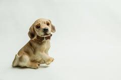 Spielen Sie das Sitzen eines Hundes auf einem hellen Hintergrund Lizenzfreie Stockfotos