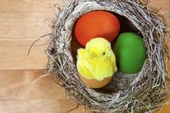 Spielen Sie Huhn in einem Oberteil hellen Ostereies in einem Nest mit Eiern Lizenzfreie Stockfotografie