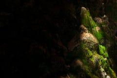 Spielen Sie mit Schatten und Sonnenlicht an einem Wasserfall Stockfotos