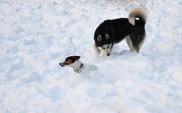 Spielen von zwei Hunden Stockfotos
