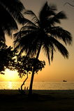 Spielende Kinder wenn Sonnenuntergänge Stockfotos