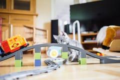 Spielerische Katze Lizenzfreie Stockfotografie