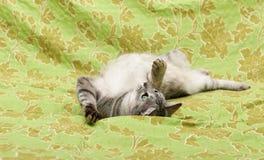 Spielerische Katze auf grünem Hintergrund, lustige Katze, humorvolles Foto des Spielens der Katze, Hauskatze, lustige Katze im in Stockbild