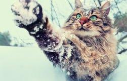 Spielerische Katze im Freien im verschneiten Winter Stockfotografie