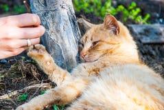 Spielerische rote Katze Lizenzfreies Stockbild