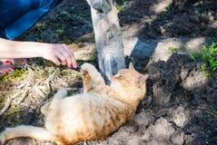 Spielerische rote Katze Stockfoto
