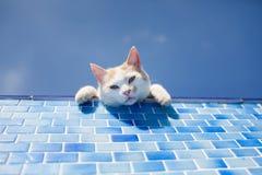 Spielerische weiße Katze neben dem Pool Stockbild