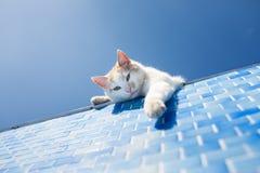 Spielerische weiße Katze neben dem Pool Stockfoto