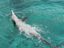 Spielerischer Delphin. Stockfoto