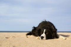 Spielerischer Hund Lizenzfreie Stockfotografie