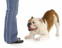 Spielerischer Hund Lizenzfreie Stockfotos