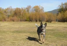 Spielerischer Hund Stockfotografie