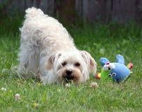 Spielerischer Hund mit Kolben in einer Luft Stockbild