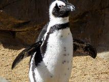 Spielerischer Pinguin lizenzfreie stockfotografie