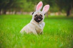 Spielerischer Pug auf einem grünen Rasen stockfoto