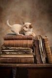 Spielerischer Welpe auf alten Büchern Stockfoto