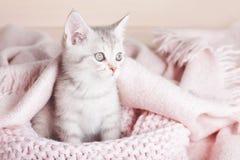 Spielerisches graues gestreiftes Kätzchen sitzt auf gestrickter rosa Decke stockbild