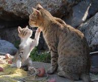 Spielerisches Kätzchen Stockfotografie