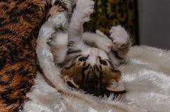 Spielerisches Kätzchen liegt auf der Bettdecke und wird gespielt lizenzfreie stockfotografie