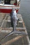 Spielfischen, Mauritius - netter Fang, ein Speerfisch Lizenzfreie Stockfotos