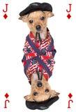 Spielkarte mit Chihuahuahund stockfotos