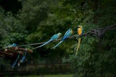 Spielplatz für Vögel Stockbild