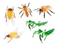 Spielwaren-Insekten auf dem weißen Hintergrund lokalisiert Lizenzfreie Stockbilder