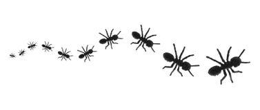 Spielzeug-Ameisen in einer Zeile Stockbild