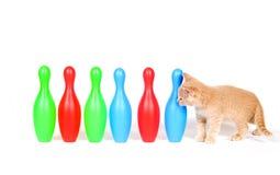 SPIELZEUG-Bowlingspielstifte des Kätzchens nachforschen Lizenzfreie Stockfotos