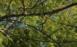 Spielzeug fest im Baum Stockfotografie