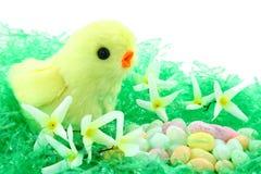 Spielzeug-Ostern-Küken mit Blumen und Süßigkeit Stockfoto