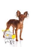 Spielzeug Terrier mit Einkaufswagen auf Weiß. Lustiges kleines d Stockbild