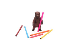 Spielzeugbär und farbige Bleistifte Stockfotografie
