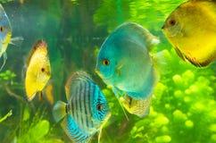 Spielzeugfische Stockbild