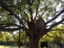 Spielzeughaus in einem Baum Stockfotos