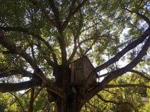 Spielzeughaus in einem Baum Stockfoto