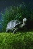 Spielzeugschildkröte, die auf Gras geht Stockfotografie