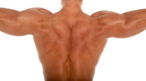 Spier lichaamsbouwer stock afbeelding