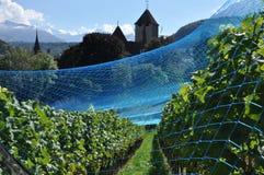 Spiez, Suiza Viñedo y red de la protección Foto de archivo